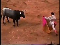Mexican Bull Fighting